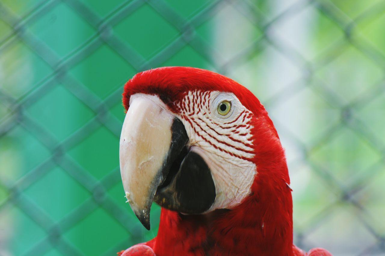 Trinidad And Tobago Zoophotography Bird Portrait Bird Photography Birds🐦⛅ Emperorvalleyzoo Check This Out Birds Of EyeEm  Zoo Photography  Bird Posing