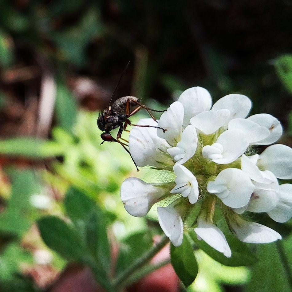 Arz'da,hiçbir canlı yoktur ki, onun rızkı Allah'a ait olmasın.Tüm canlıların, yerleşim yerini de, geçici bulunduğu yeri de,(Allah)bilir. Bunların hepsi, apaçık Kitap'ta dır. HUD(11)/6 Kuran-ı Kerimden Ayet Hakikat Hak TÜRKİYEM 🌹 💞 Her Yeri Farkli Guzel Turkey ı Love Green I Love Green *^▁^* ı Love Nature! White Flower Beyaz çiçek Böcek Insect On A Flower Insects Collection White And Green Turkeyphotooftheday Flowers Yeşil Doğa Flowers_collection Nereden Türkiye Bolu  Gerede