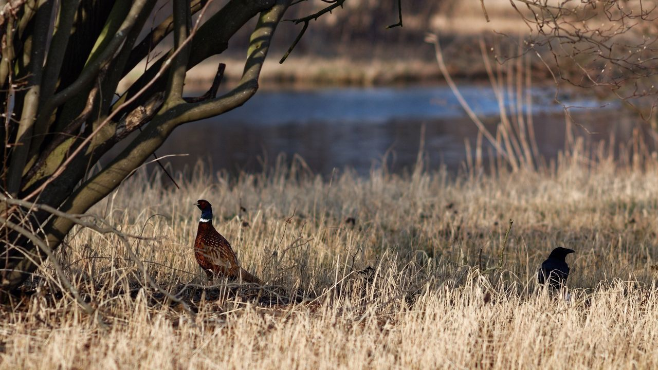 Living Apart Together Landscape_photography Birds Dutch Landscape Living In The Shadows