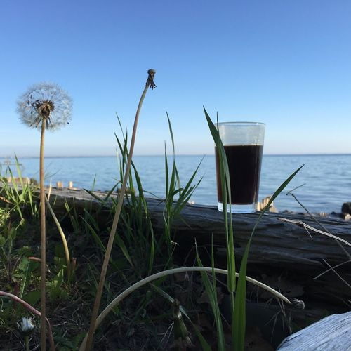 Sea Water Horizon Over Water Nature Clear Sky Beauty In Nature No People Growth Outdoors Tranquility Tranquil Scene Day Plant Beach Scenics Grass Sky Close-up Flower Freshness Coffee Coffee Time