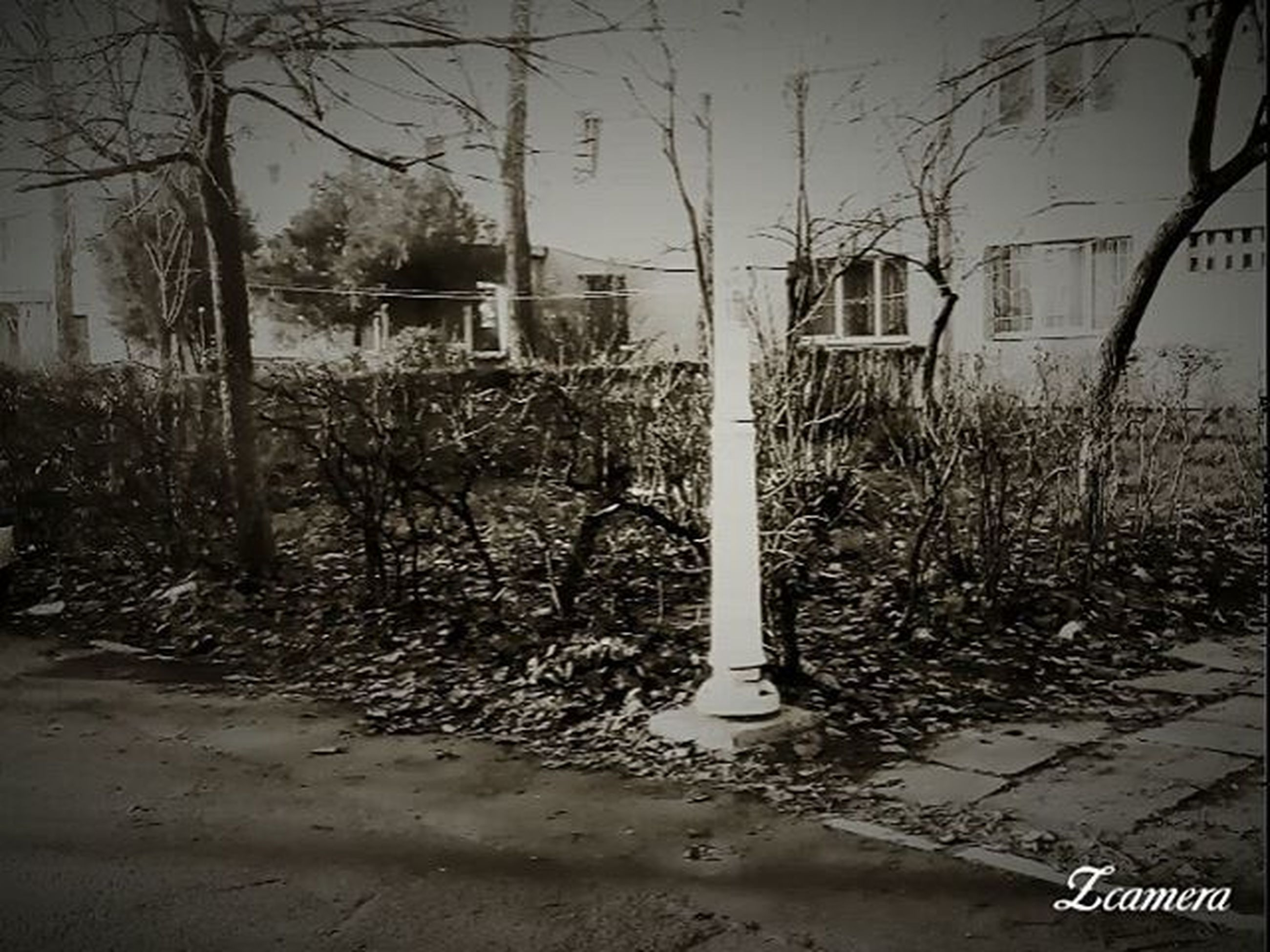 building exterior, architecture, built structure, tree, bare tree, text, city, house, residential building, residential structure, branch, day, outdoors, no people, western script, communication, street, tree trunk, building, nature