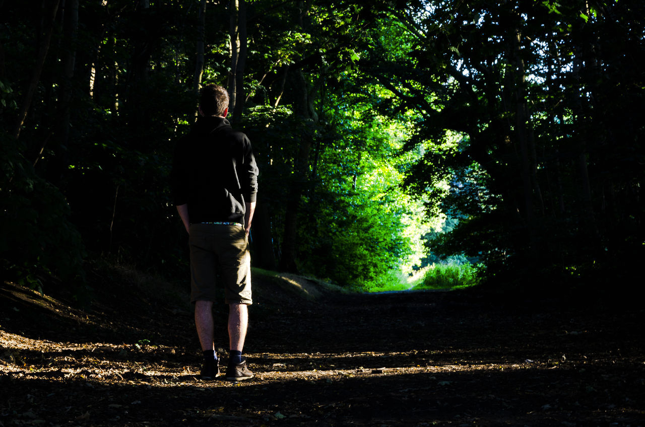Rear View Of Man Standing On Field In Forest