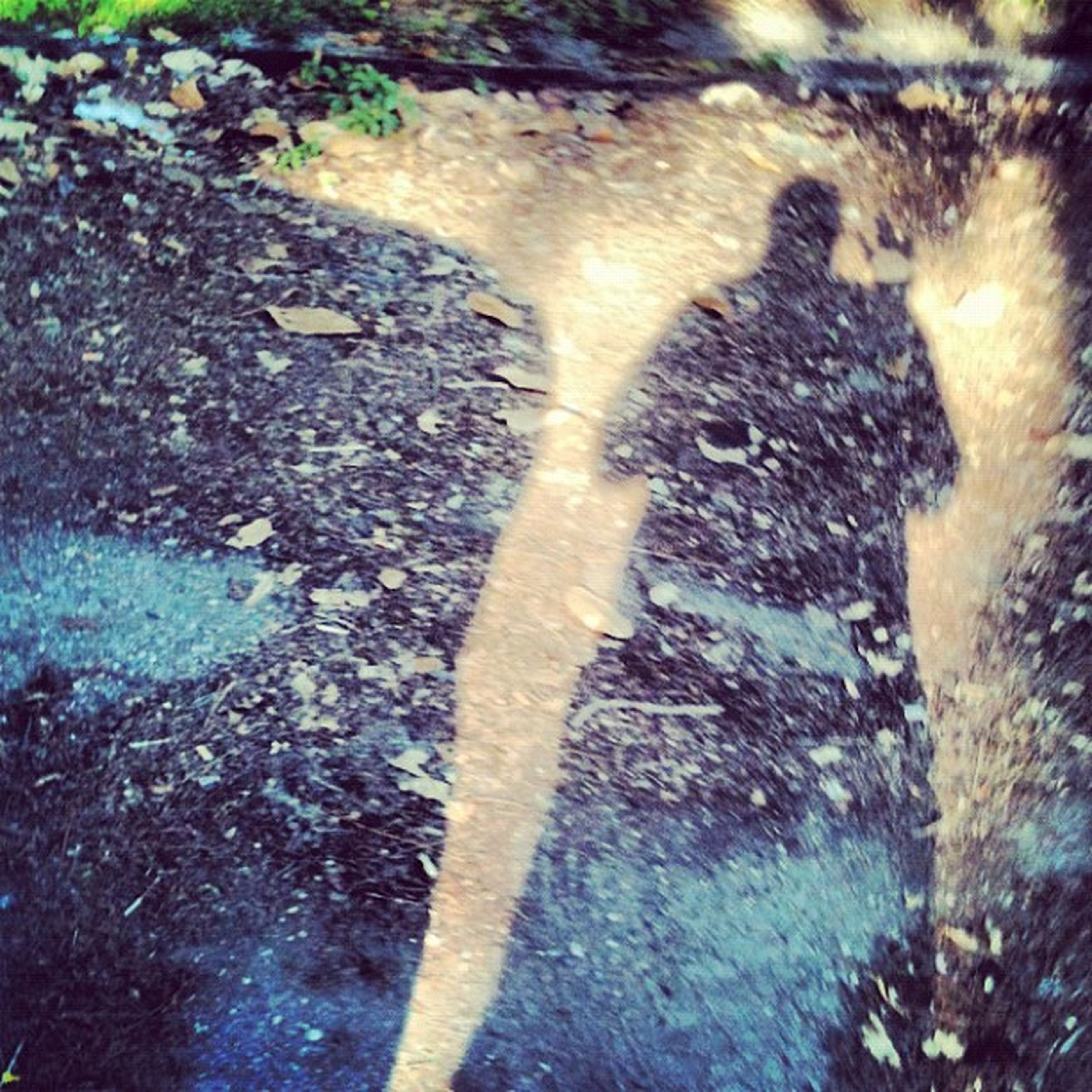 high angle view, water, nature, close-up, sunlight, day, outdoors, puddle, shadow, street, asphalt, no people, textured, ground, full frame, directly above, wet, plant, rock - object, unrecognizable person