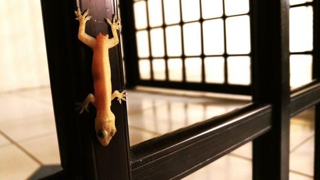 Last moment Lizard Nature Window Frame Down Animal