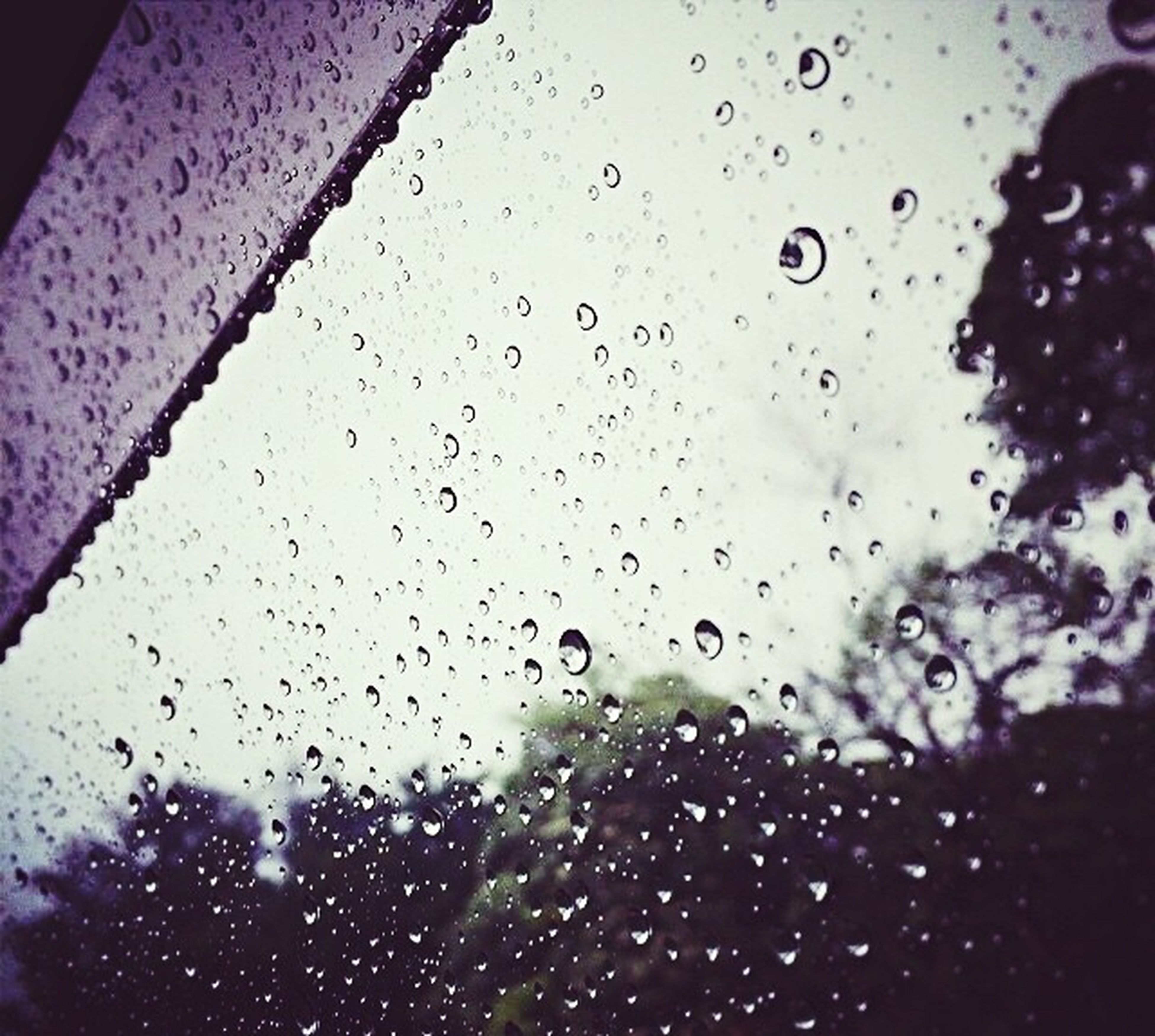 drop, wet, rain, water, window, raindrop, weather, indoors, transparent, sky, glass - material, season, focus on foreground, silhouette, droplet, monsoon, glass, dusk, close-up, backgrounds