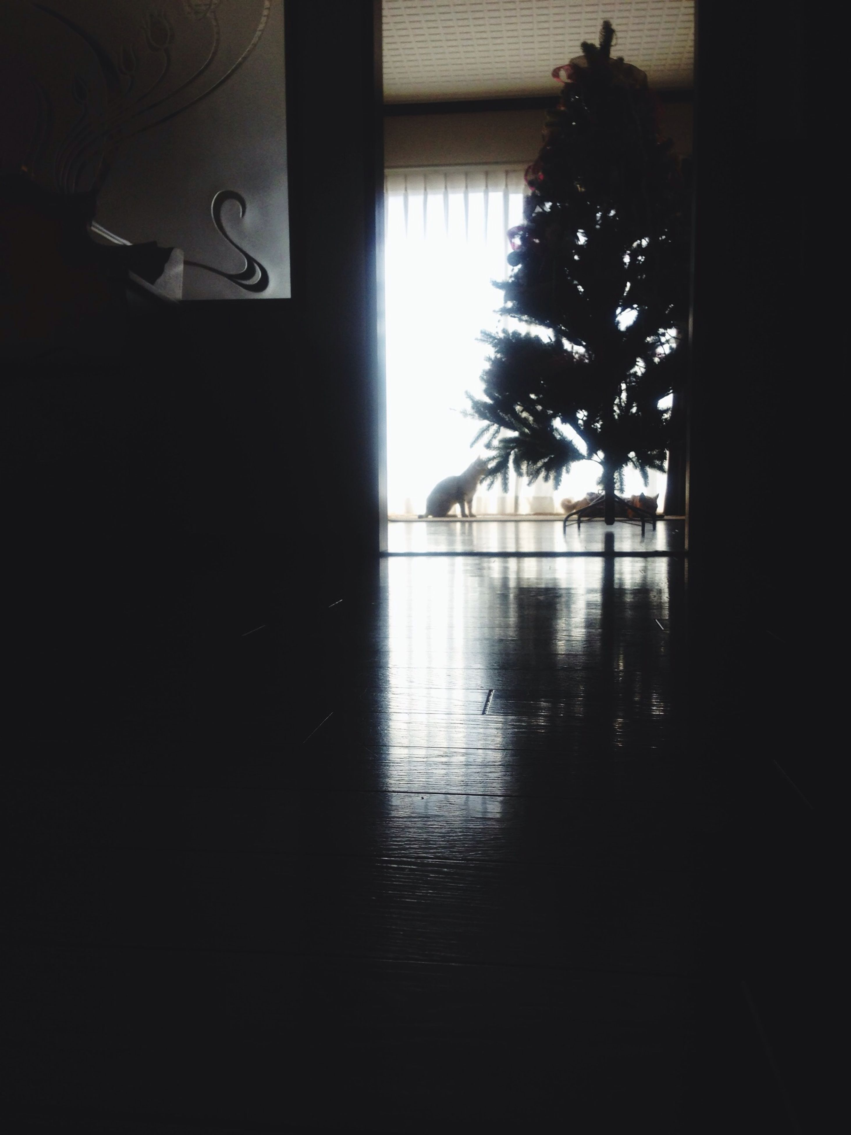 indoors, window, silhouette, tree, glass - material, built structure, transparent, sunlight, architecture, dark, reflection, shadow, home interior, day, no people, looking through window, water, empty, absence, house