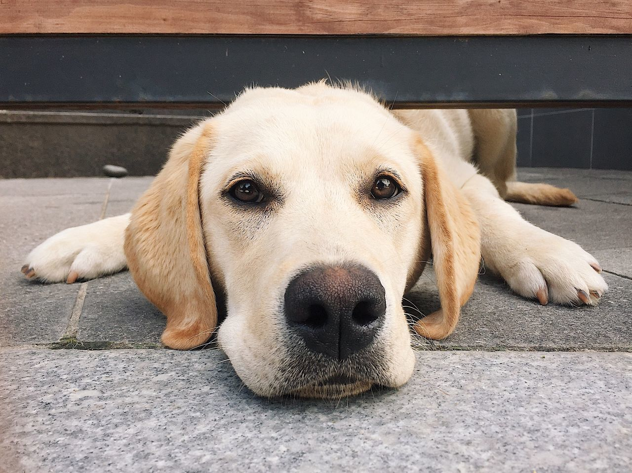 Puppy🐶 Puppy Doggy Dog Golden Retriever Dog Looking Under Gate Dog Head Dog Head Under A Door Pets One Animal Looking At Camera Animal Themes Close-up No People EyeEm Best Shots