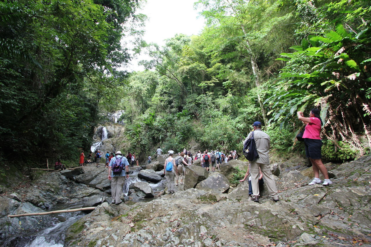 Visiting a Waterfall in the Jungle - with lots of other Tourists Adventure Beauty In Nature Day Forest Growth Hiking Large Group Of People Men Nature Outdoors People Real People Roxborough Tobago Togetherness Tourist Attraction  Touristic Tourists Tourists Destination Tourists On Tour Touristspot Tree Walking Waterfall Women