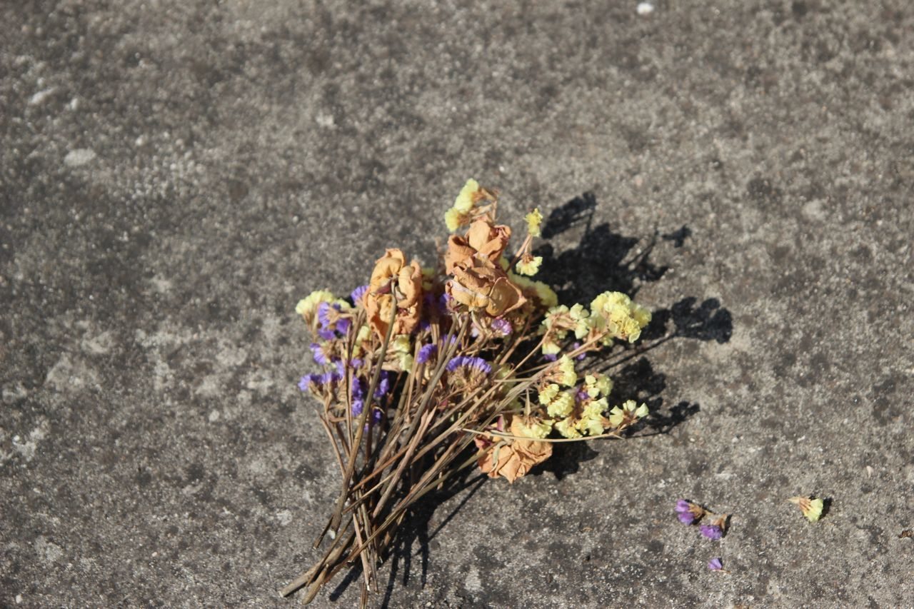 J'ai perdu la saturation :-/ Taking Photos Enjoying Life Rip Summer Days Dried Flowers Mummy Flower Lost ArtWork