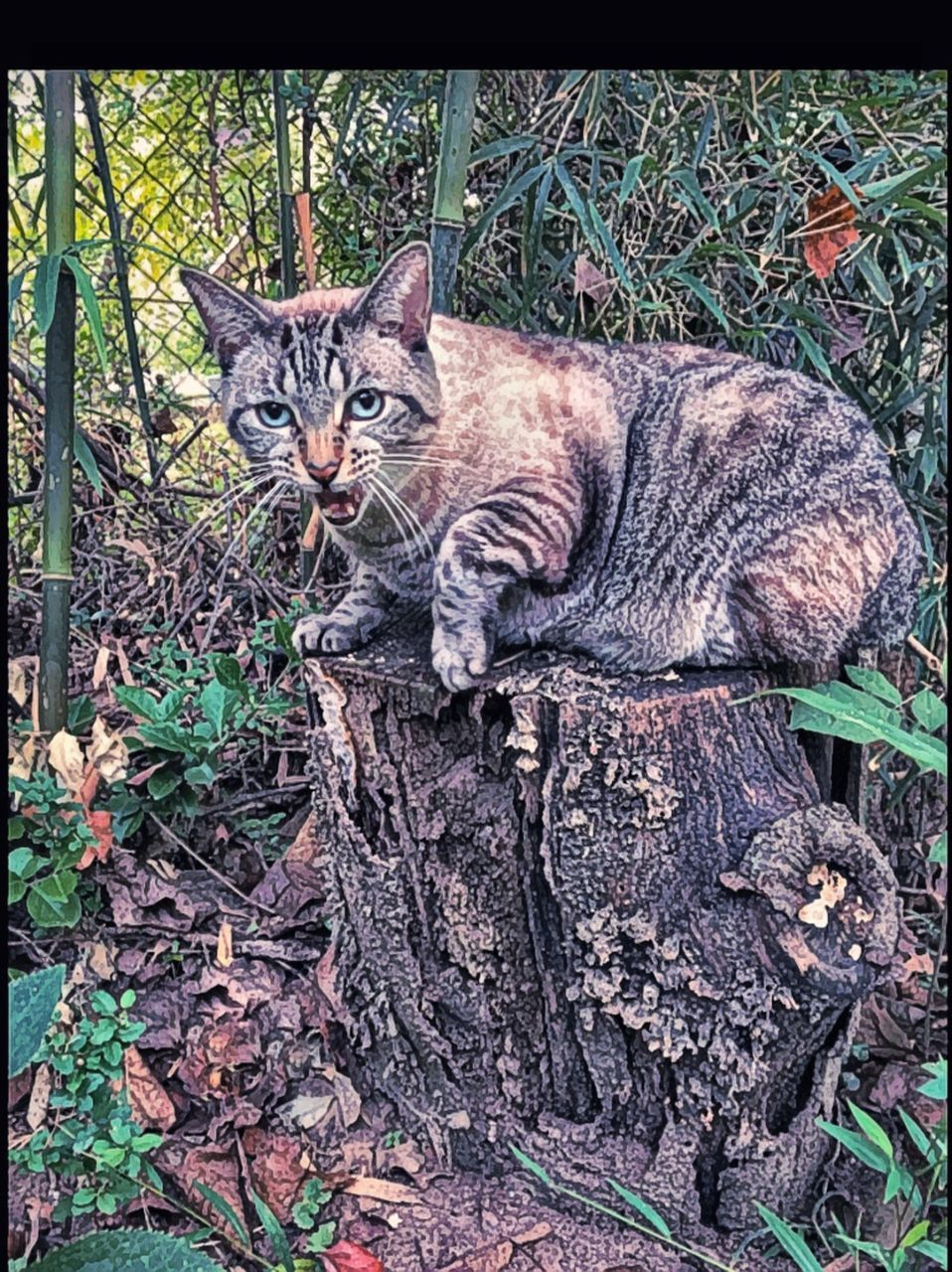 domestic cat, looking at camera, feline, pets, animal themes, domestic animals, portrait, one animal, mammal, no people, outdoors, day, sitting