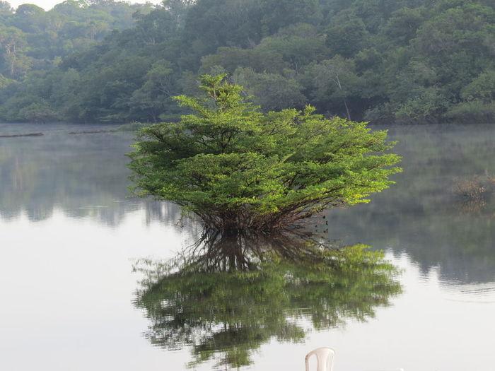 Amazon Amazon Rain Forest Amazon Rainforest Amazon River Amazonas Amazonas-Brasil Beauty In Nature Brazil Manaus Manaus, Amazonas, Brazil Reflection Tranquility Travel The World Tree Water
