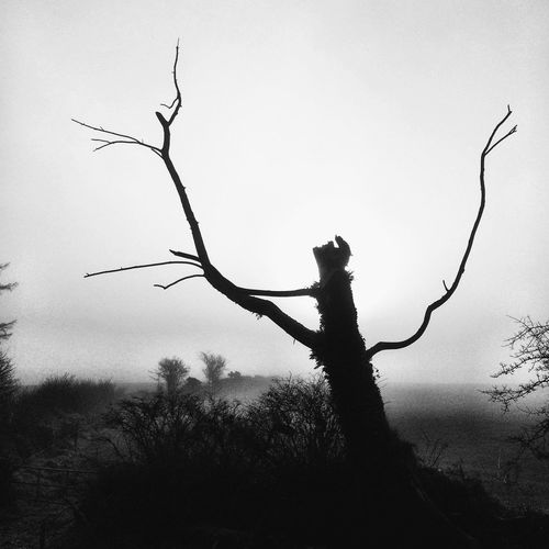Standing Still Bnw Blackandwhite Fog Tree Branch Nature Bare Tree Outdoors Silhouette Day Dead Tree No People Tree Trunk