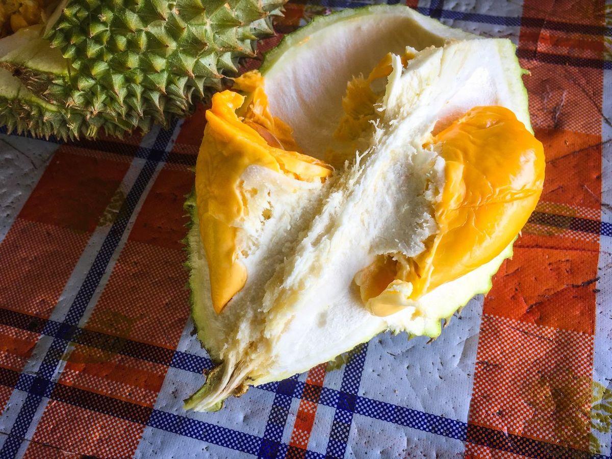 Durian Durian Fruit Durians Durians Shop Balikpulau Balik Pulau Penang Penang Malaysia Orchard Showcase July Showcase July 2016 Durians Day.  Durian Season Durianstall