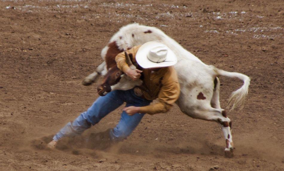 Beautiful stock photos of cowboy, Animal Themes, Balance, Bull - Animal, Casual Clothing