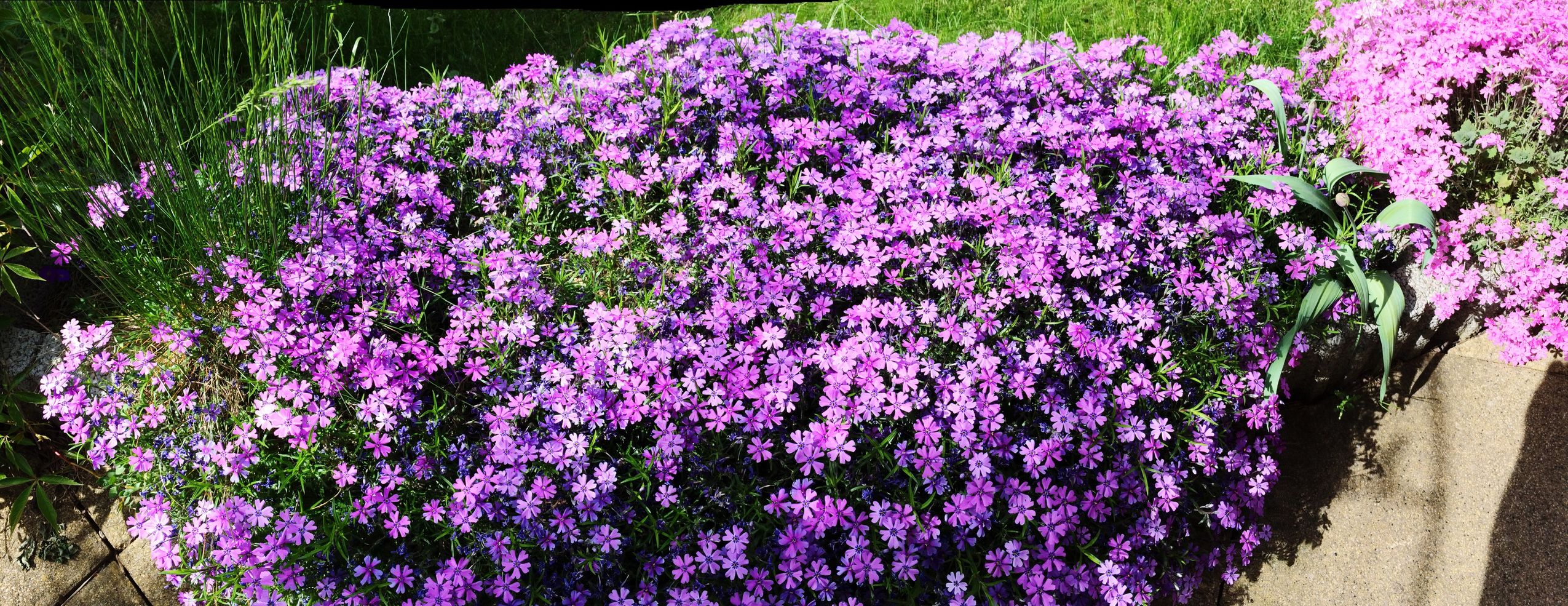 Flower Freshness Fragility Growth Purple Beauty In Nature Close-up Nature Plant Blooming Day Petal Pink Color Springtime In Bloom Growing No People Tranquility Formal Garden Garden