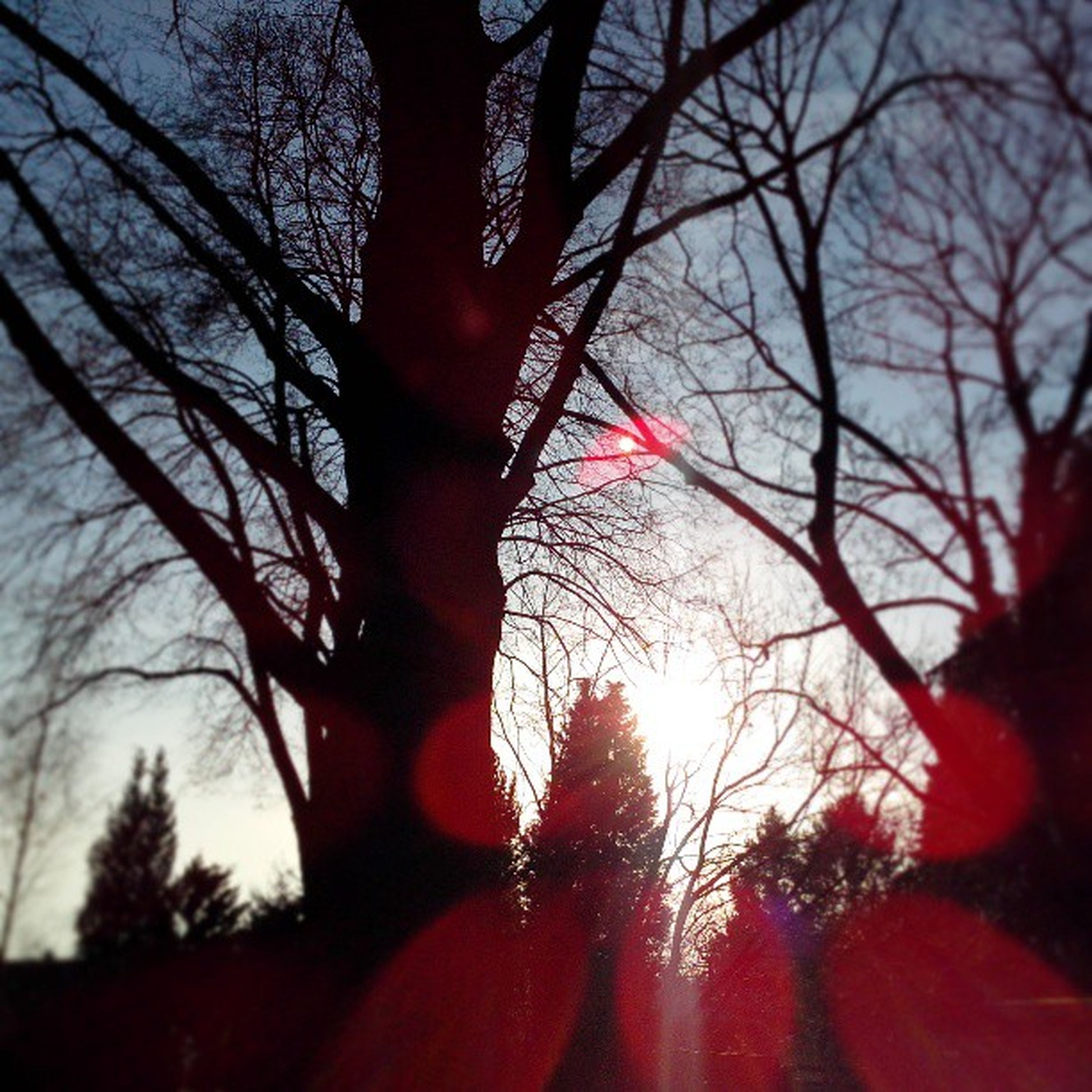 tree, sunset, bare tree, branch, sun, silhouette, sky, tranquility, low angle view, nature, beauty in nature, scenics, red, lens flare, tranquil scene, sunlight, sunbeam, orange color, back lit, growth