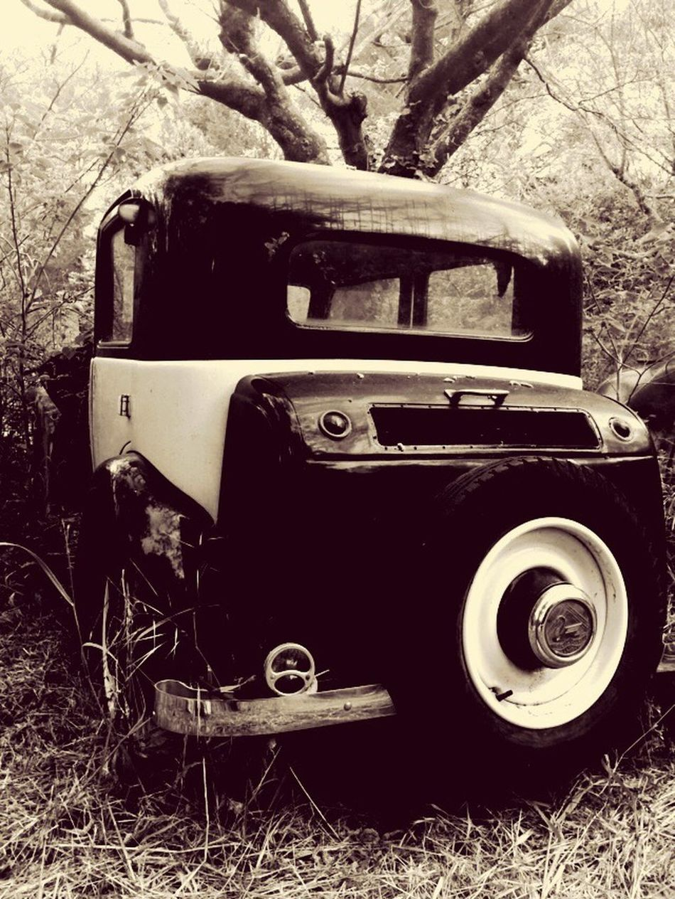 old car in grass 🌲🌳🚙 Car Oldcar Grass No People Herbs Vintage Outdoors Sepia Sepia_collection Sepia Photography