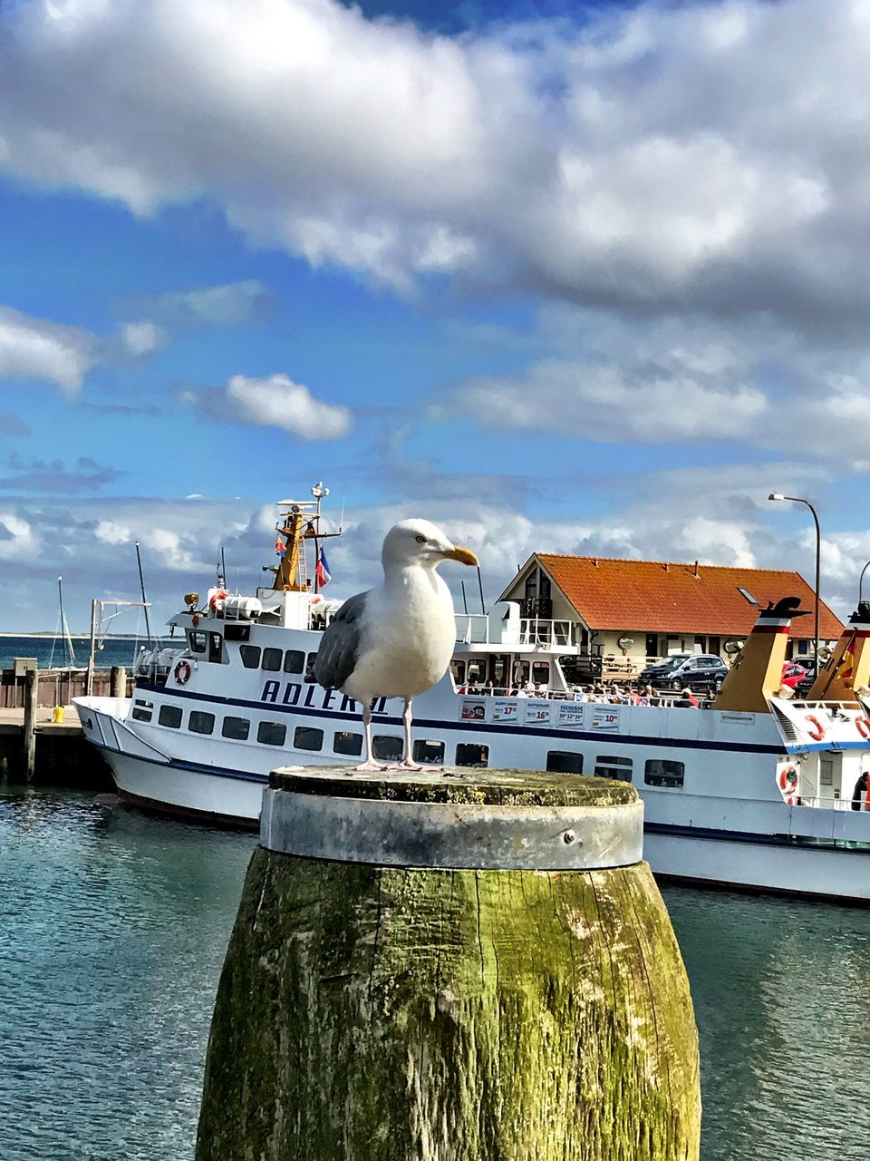 bird, animals in the wild, seagull, animal themes, water, sky, day, sea, nautical vessel, cloud - sky, one animal, animal wildlife, perching, nature, sea bird, harbor, mode of transport, outdoors, moored, transportation, waterfront, no people, pelican