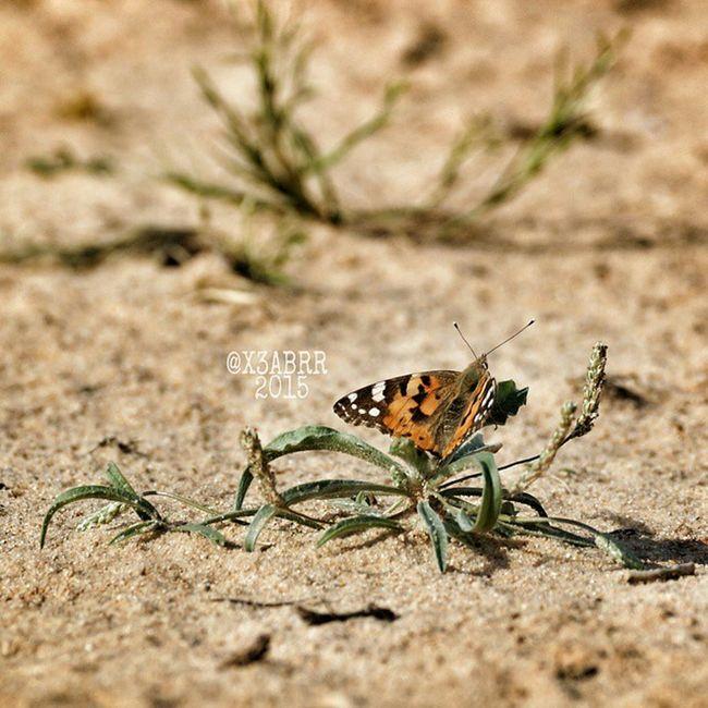 😚 فراشة Nature Colorful cute صورة تصويري Butterflyinsects insect bug bugs TagsForLikes.com bugslife macro closeup nature animals animals instanature instagood macrogardener macrophotography creature photooftheday wildlife earth naturelover