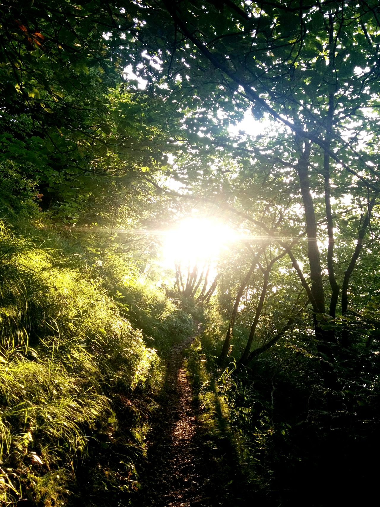 Capturing Freedom Run, breathe, shine: be free. Towards The Light On The Path EyeEm Best Shots EyeEm Nature Lover A Walk In The Woods Runningman Trailrunning BREATHEfree Nature On Your Doorstep