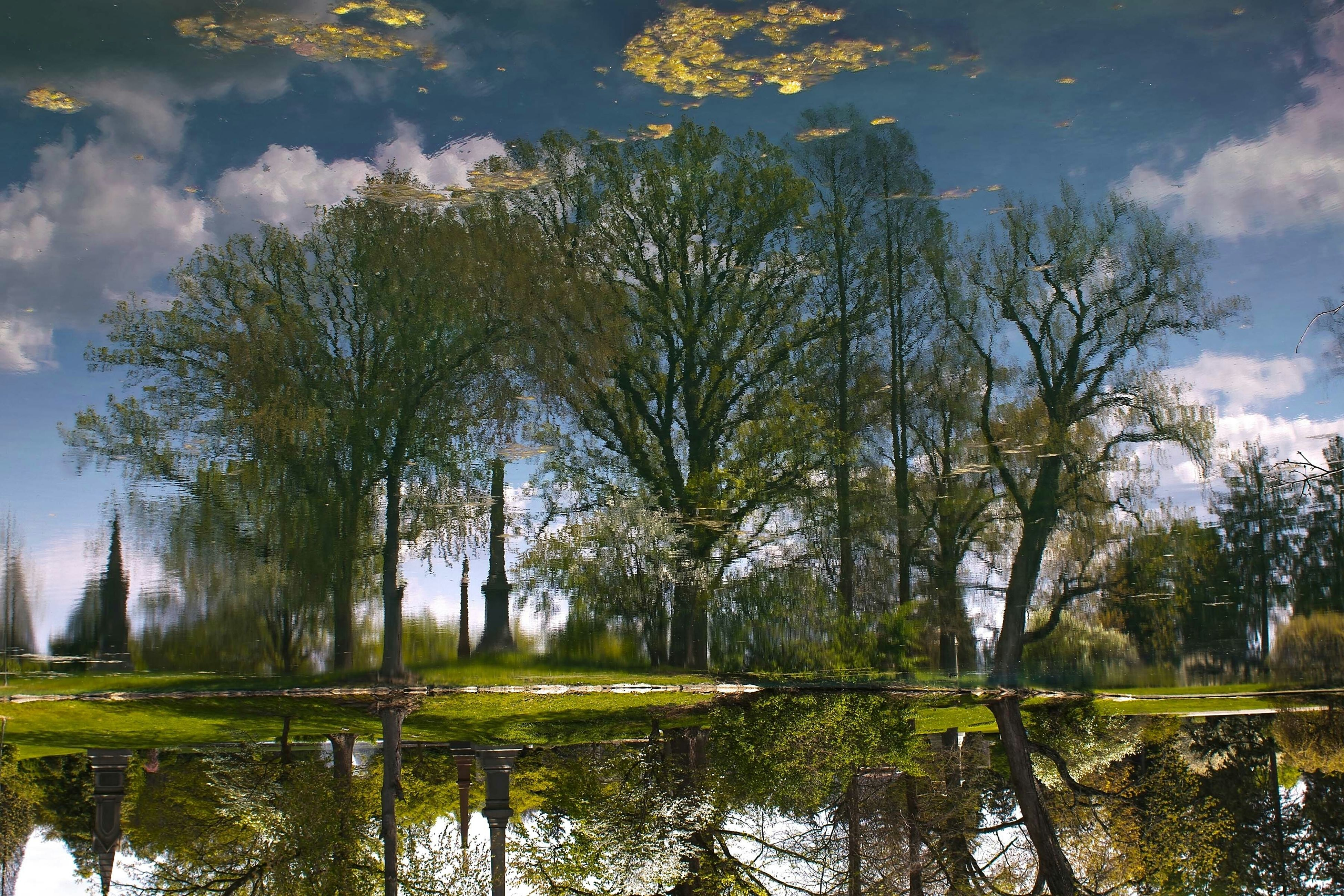 tree, reflection, water, lake, tranquility, tranquil scene, sky, nature, beauty in nature, waterfront, scenics, growth, pond, branch, standing water, green color, idyllic, outdoors, river, day
