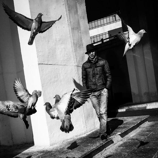 Bird Animal Themes Day Blcknwhite Tehran, Iran Streetphotography