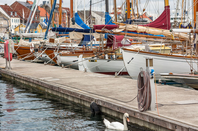 white swan and nautical vessels near a landing stage Baltic Sea Balticsea Boat Boats Boats⛵️ Dock Harbor Houses Landing Stage Mast Nautical Vessel Sailboat Sailboats Sailing Boat Sailing Boats Swan Water White Swan