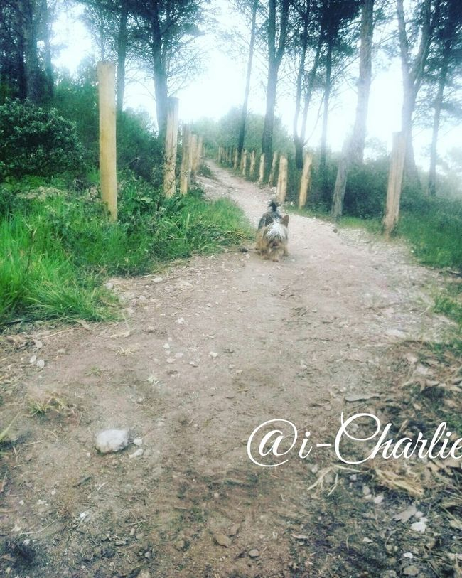 journey 😙petintrip💘 @i-Charlie Tree Outdoors Nature No People Growth Day Beauty In Nature Tree Trunk Mammal