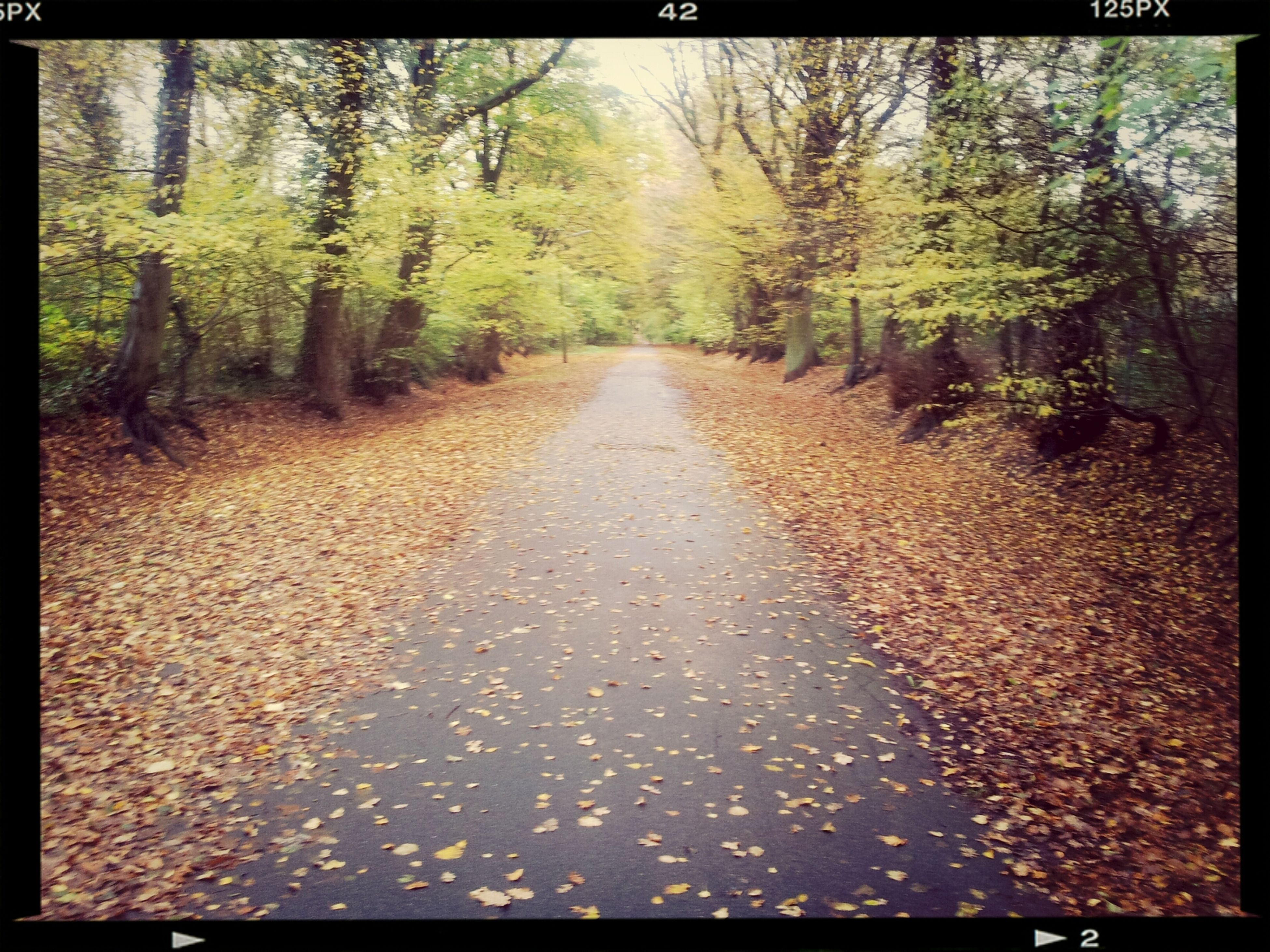transfer print, tree, the way forward, auto post production filter, diminishing perspective, tranquility, vanishing point, forest, nature, tranquil scene, growth, road, leaf, surface level, day, autumn, transportation, outdoors, beauty in nature, no people