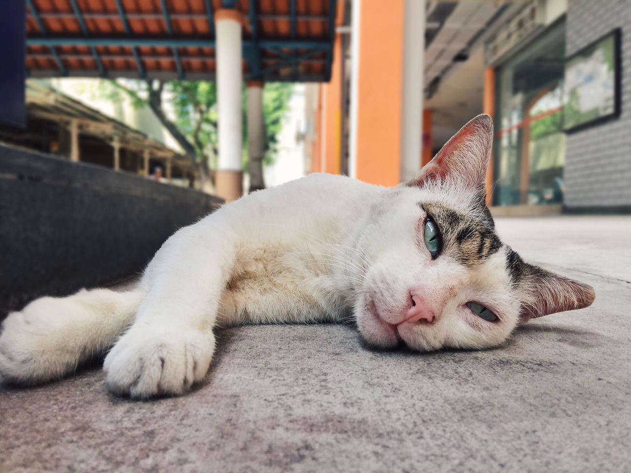 catzZzzzz zzz... Awake Cat Close-up Lazy Lying Down Monday Blues One Animal Relaxation Sleep Sleeping Sleeping Cat Sleepy Stray Cat