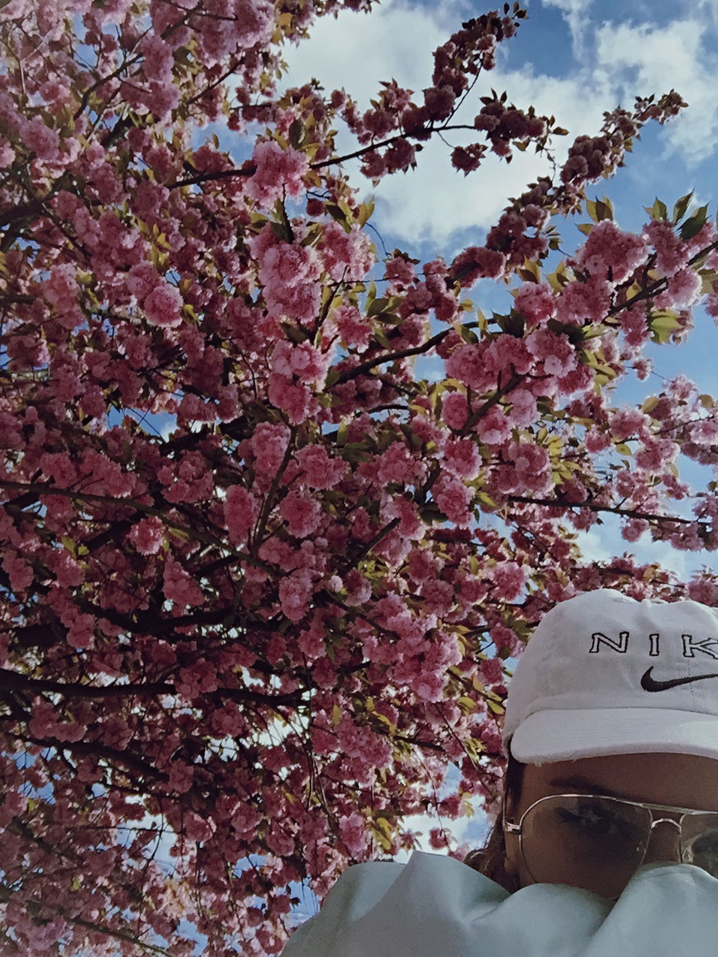 tree, flower, branch, low angle view, growth, cherry blossom, blossom, beauty in nature, pink color, sky, freshness, nature, cherry tree, fragility, day, outdoors, springtime, no people, blooming, in bloom
