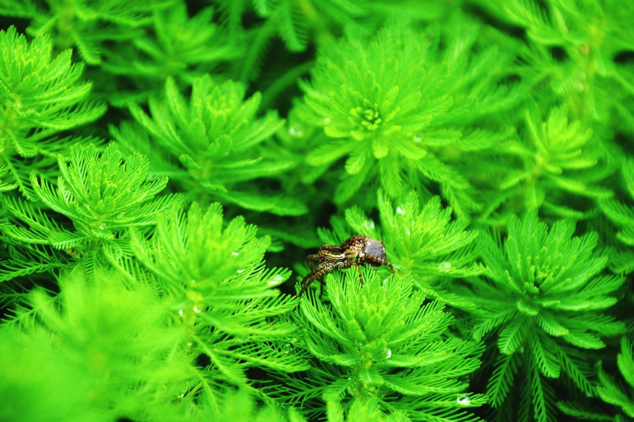green color, one animal, animals in the wild, insect, animal themes, leaf, nature, animal wildlife, growth, high angle view, no people, close-up, outdoors, plant, day, beauty in nature, freshness