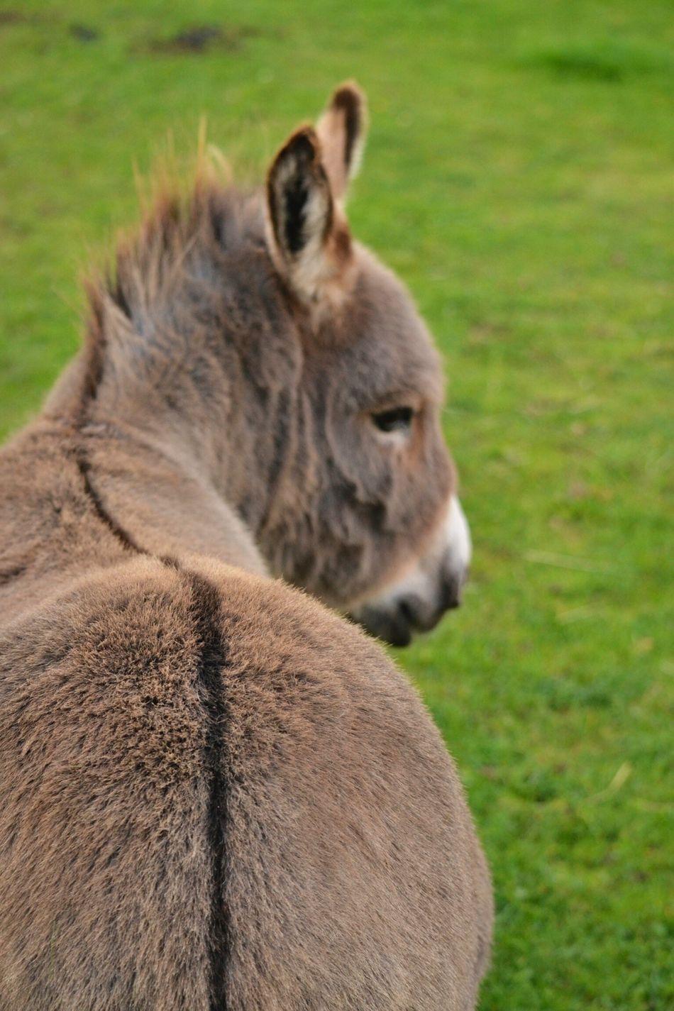 Beautiful stock photos of donkey, Animal Body Part, Animal Head, Animal Themes, Day