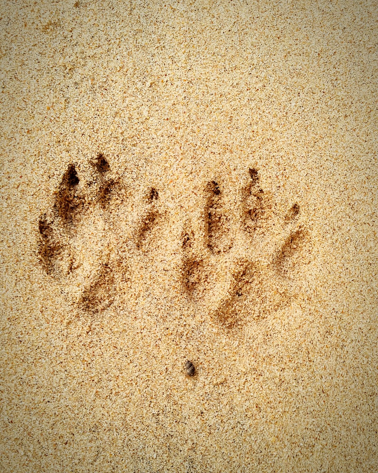 Paw Prints Animal Sand Beach