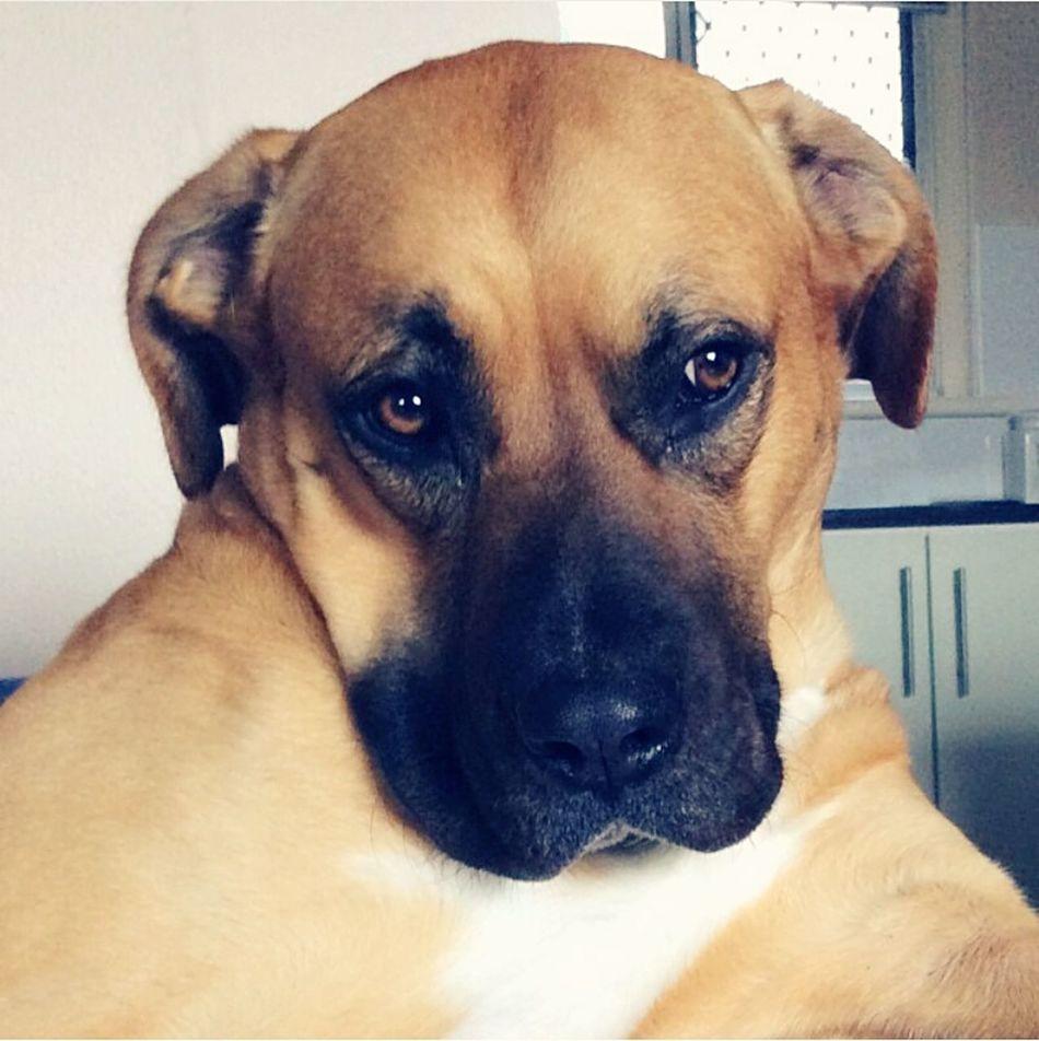 My boy Sir Portrait Gorgeous Bestboy  Love Dogs Of EyeEm Wingman Adore Heartmelting Beautifulface