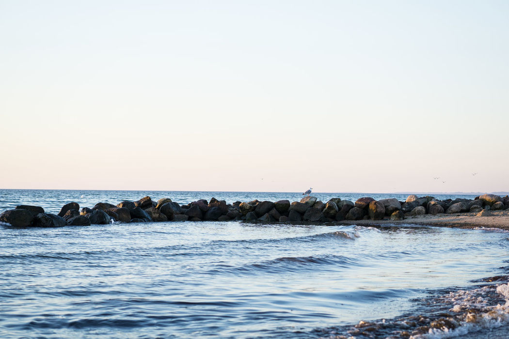Animal Themes Animals In The Wild Baltic Sea Beach Clear Sky Day Gull Horizon Over Water Morning Morning Light Nature No People Outdoors Sea Sky Sunset Water