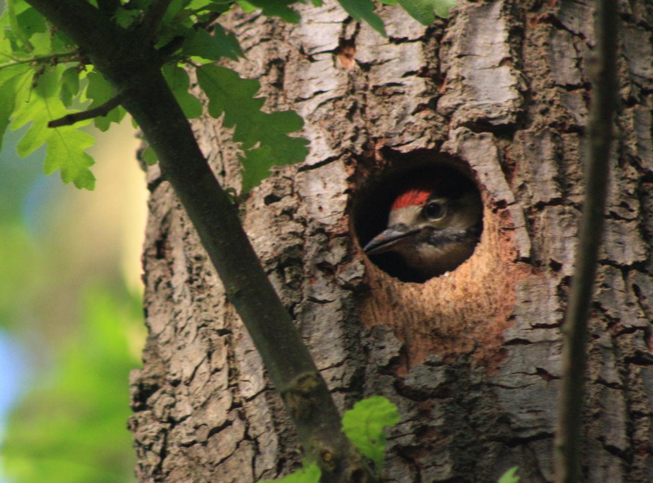 Bird Close-up Nature Tree Wildlife Woodpecker In Tree