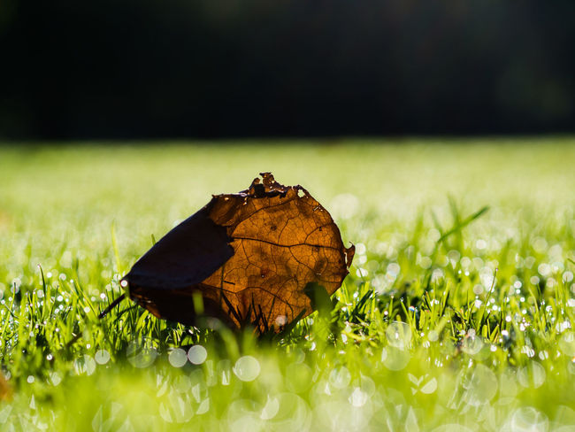 Series of one session in a park in Rotterdam Grass Beauty In Nature Close-up Fragility Leaf Nature No People Outdoors