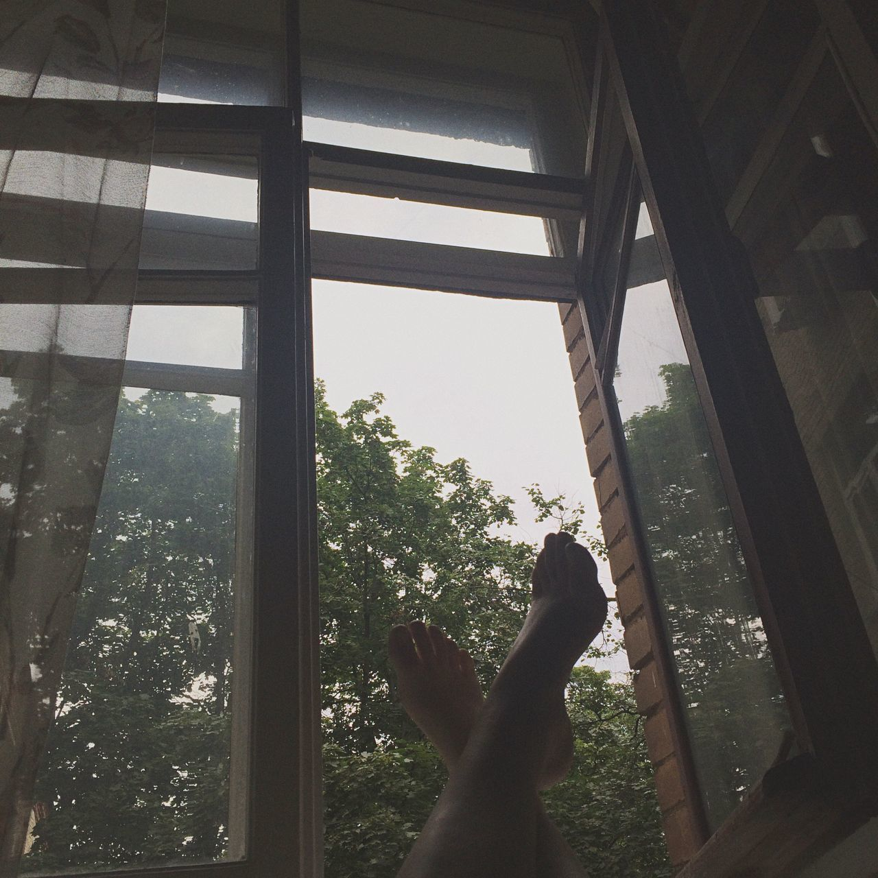 window, real people, indoors, one person, personal perspective, human leg, barefoot, tree, human hand, human body part, lifestyles, day, low section, women, sky, nature, close-up, people