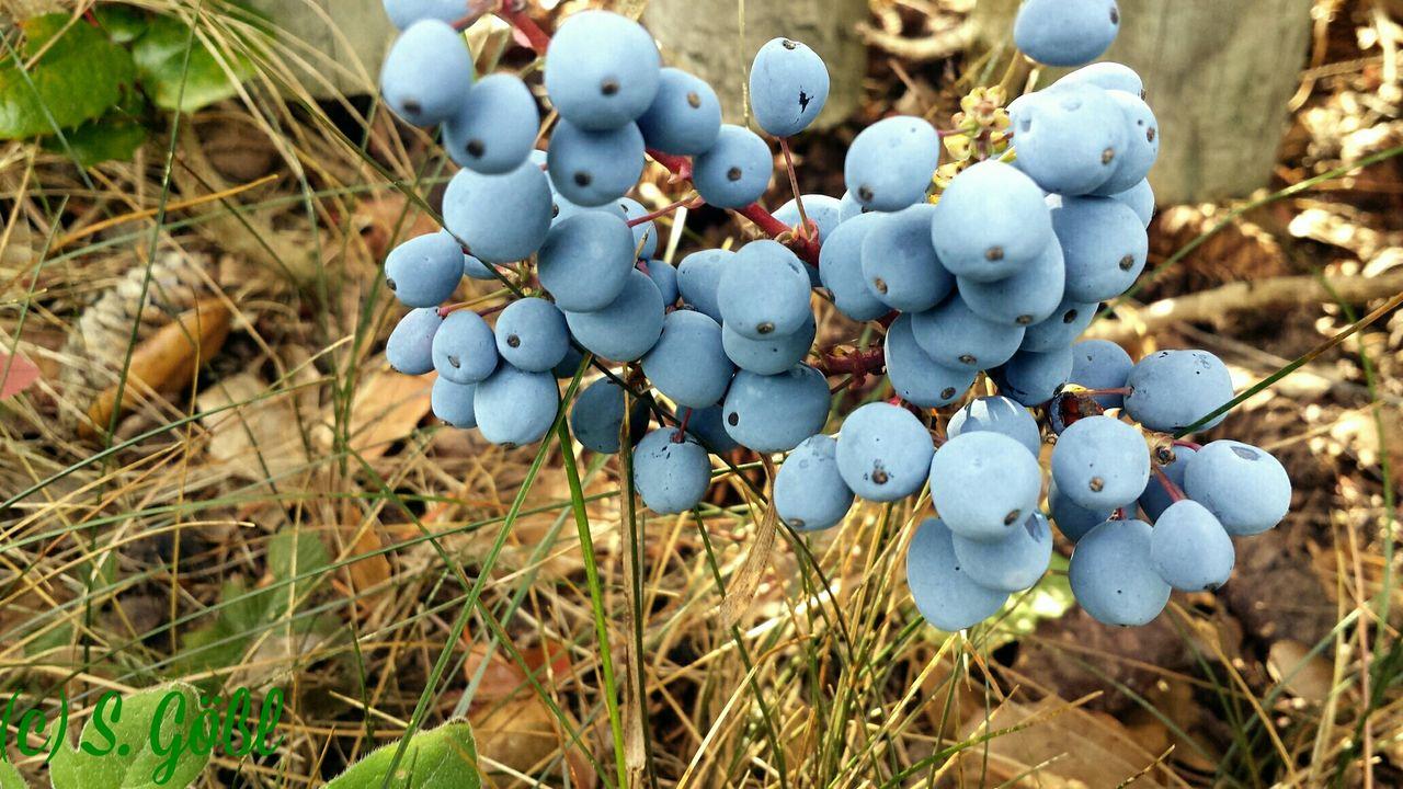 Schlehen Be Green  EyeEm Nature Lover Eyem Nature Lovers  Nature Walking Around Makro Fruit Plant True Nature