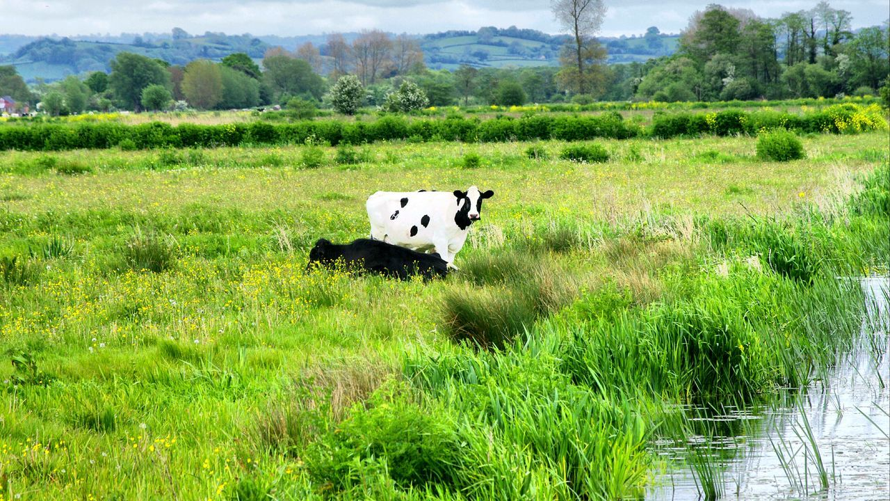 grass, one animal, animal themes, field, day, cow, green color, no people, landscape, nature, mammal, domestic animals, outdoors, tree, sky