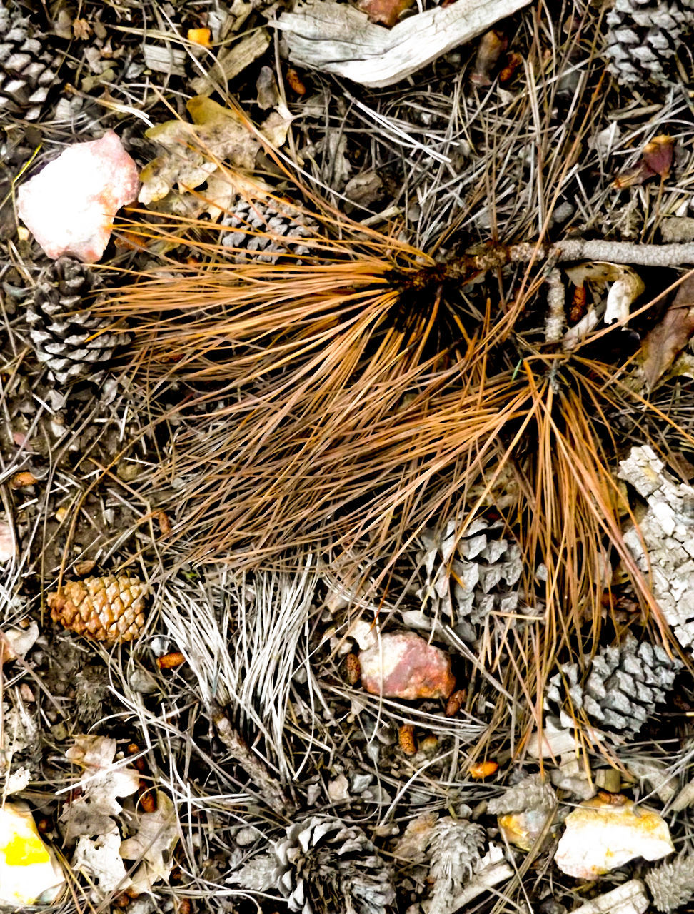 dry, high angle view, twig, bird nest, no people, day, outdoors, nature, close-up, fragility, animal themes