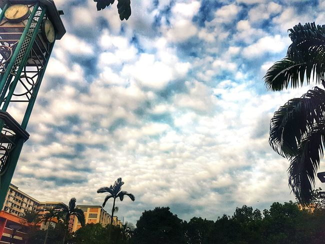 Instead of pokemon go, how about looking at the pretty clouds? Clouds Nature Beauty Sky Park S7 Edge Clock Tower Clock Tree HDB Housing