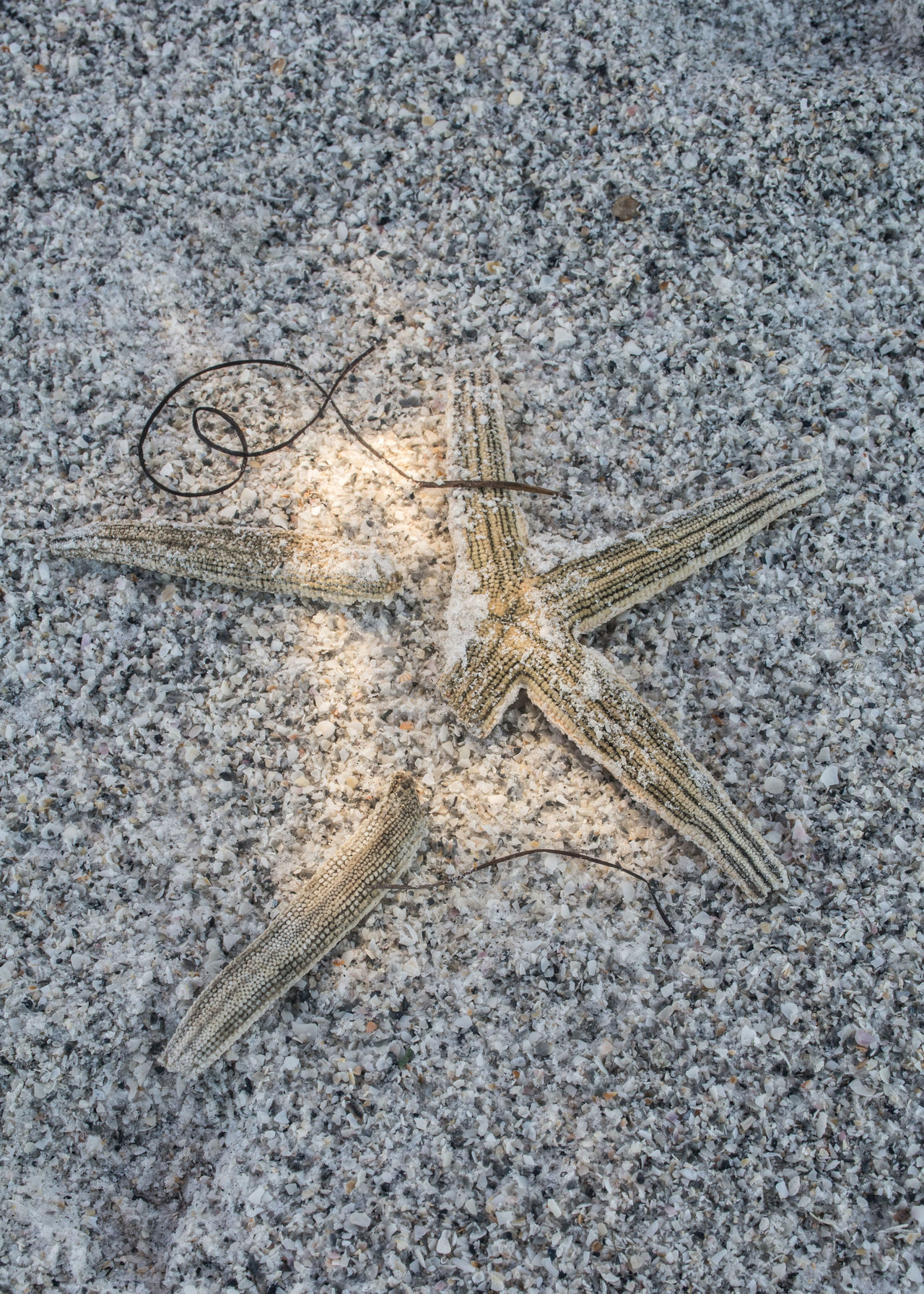 Broken, yet still beautiful! Animal Themes Beach Beachphotography Beauty In Nature Close-up Found Object Island Life No People Ocean Oceanside On The Shore Outdoors Sea Life Starfish  Starfish At Beach