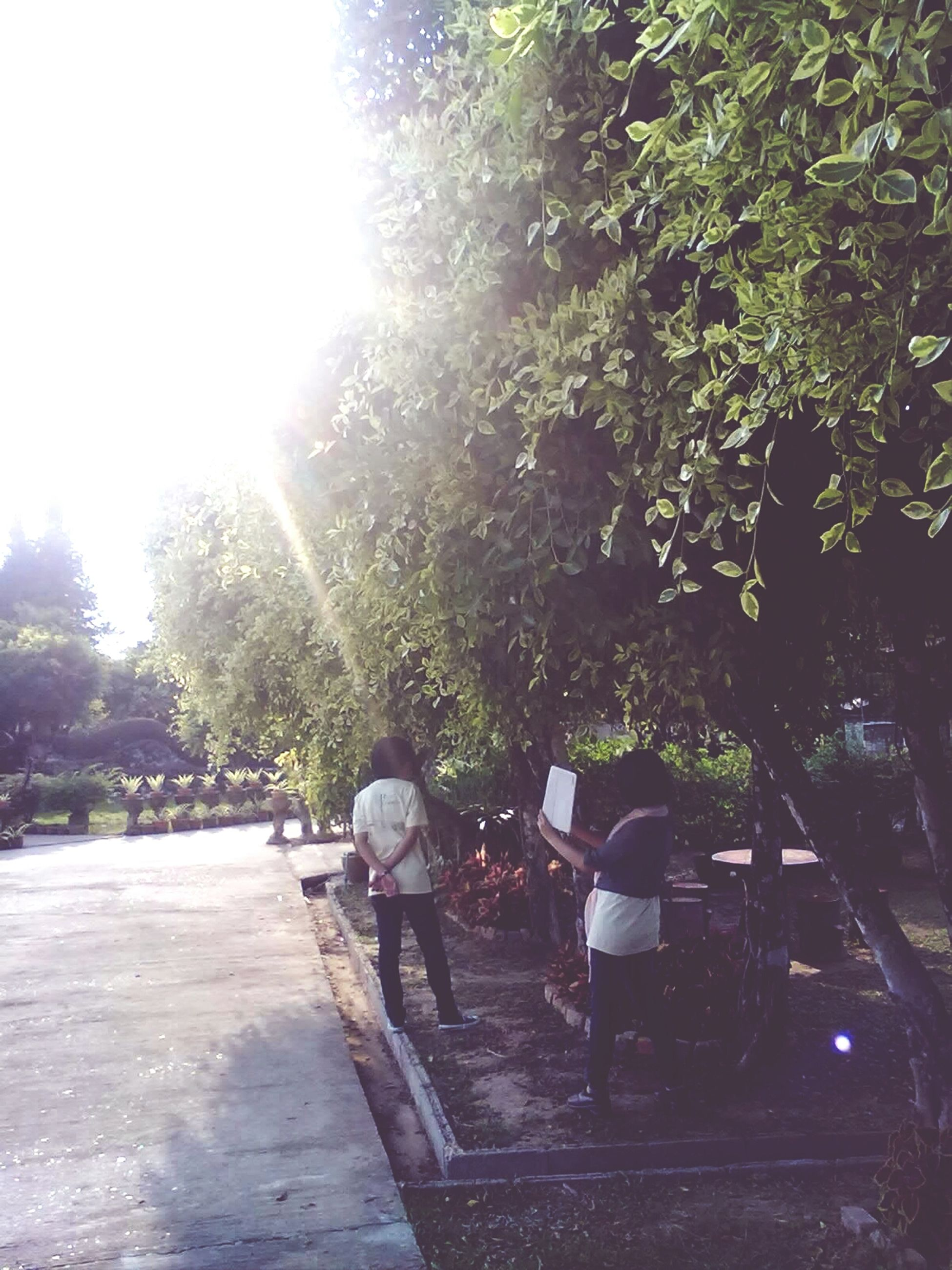 tree, men, lifestyles, rear view, person, leisure activity, sunlight, togetherness, bench, full length, sitting, park - man made space, walking, relaxation, casual clothing, footpath, park bench, bonding