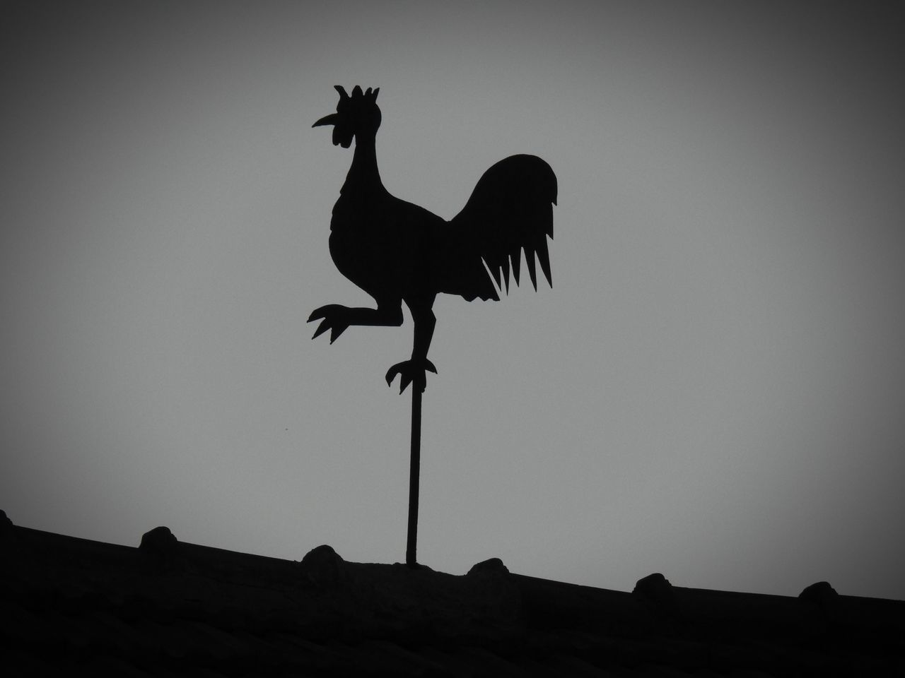 Weathercock Weathercock Weathervane Weather Vane Bird Animal Themes Clear Sky Rooster Silhouette Silhouette Silhouettes Silhouette_collection Silhoutte Photography Blackandwhite Black And White Black & White Blackandwhite Photography Black And White Photography Black&white Wind