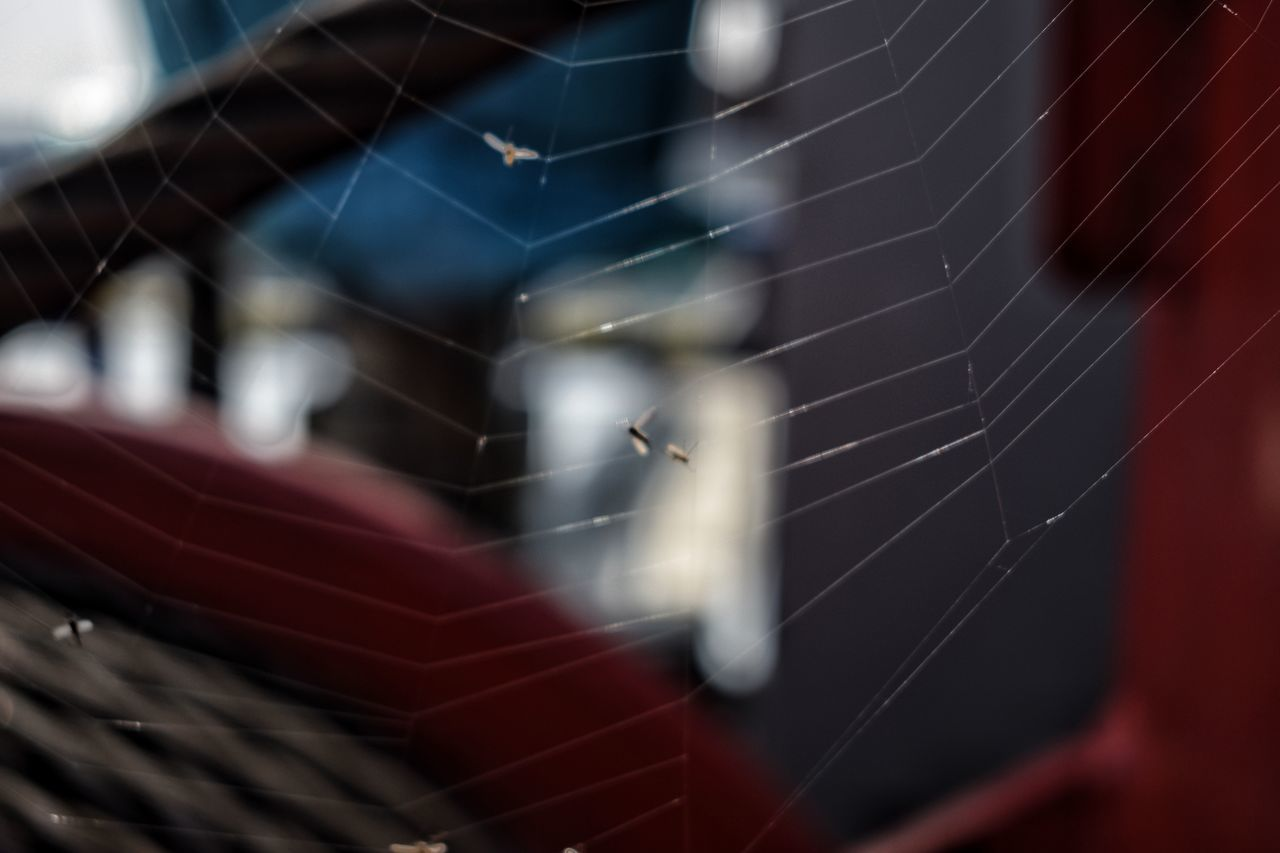 Close-up No People Flying Outdoors Day Animal Themes Spiderweb Spiderworld Spiderman Spider Web Sky