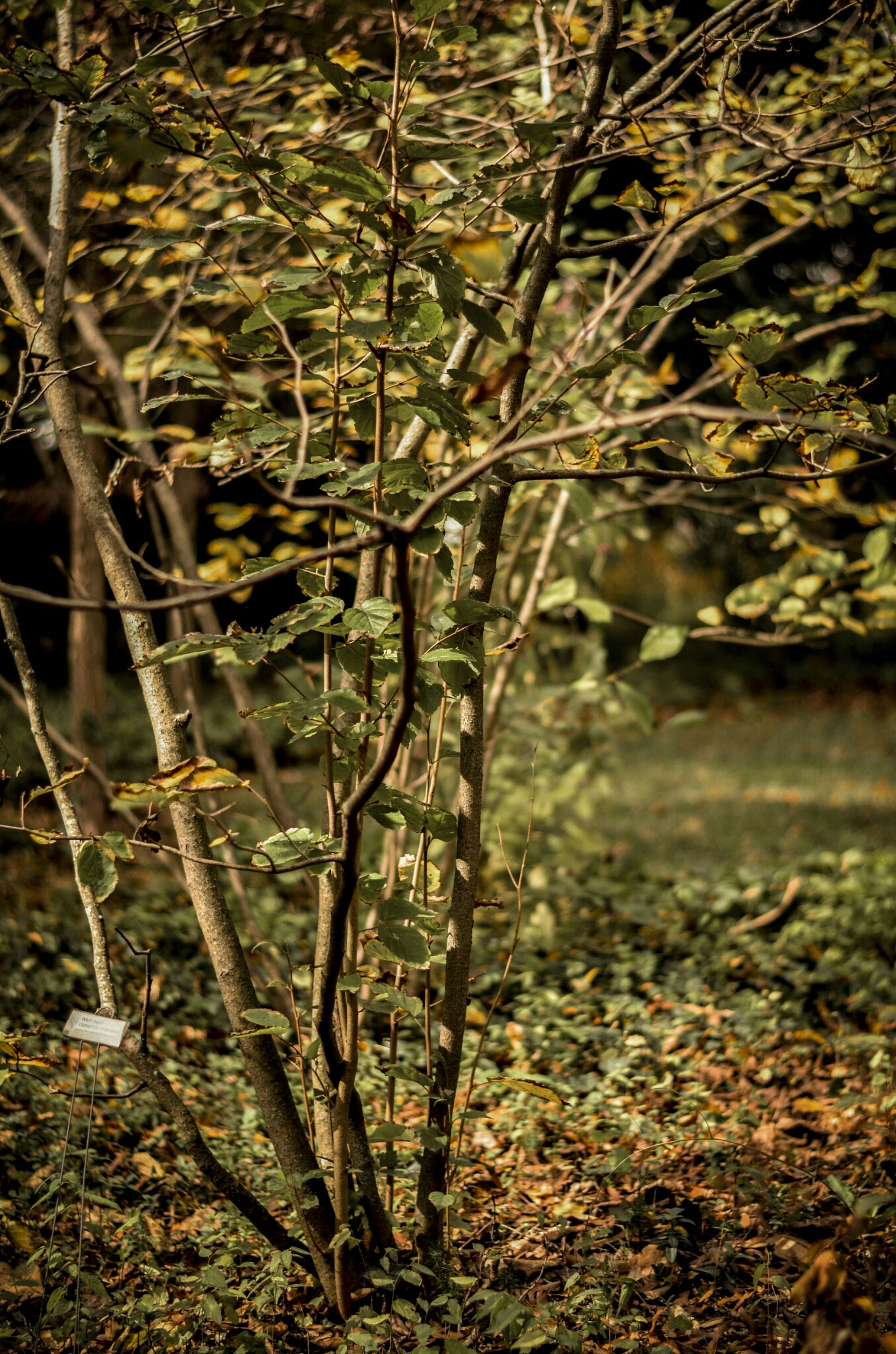 dry, nature, growth, forest, tranquility, grass, plant, leaf, tree trunk, field, tree, high angle view, day, outdoors, no people, branch, beauty in nature, water, twig, autumn