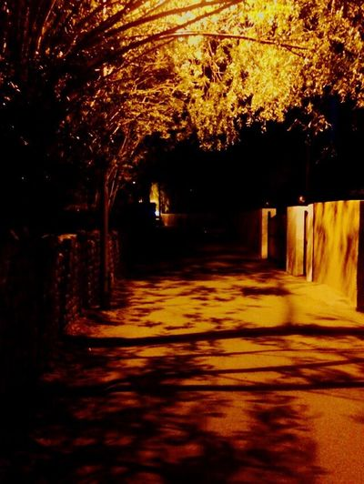 When roads is all you have. Tree No People Outdoors The Way Forward Nature Night Alone Lowlight IPhoneography