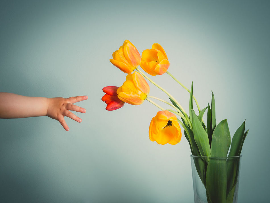 Beautiful stock photos of tulip, Child, Childhood, Copy Space, Cropped